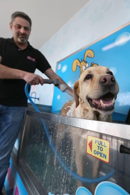 LuxeWash DIY Dog Wash - Happy dog being washed at LuxeWash DIY Dog Wash Station