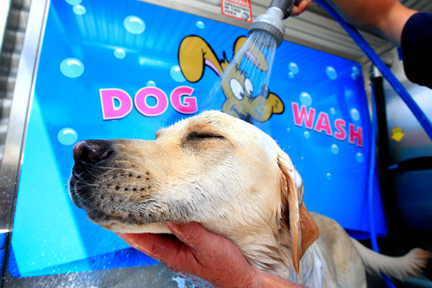 Dog Wash redbank plains - Luxe Wash