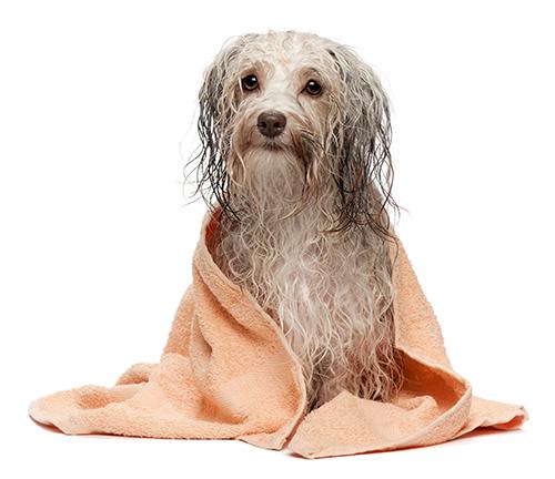 Diy dog wash redbank plains luxe wash dog wash solutioingenieria Images
